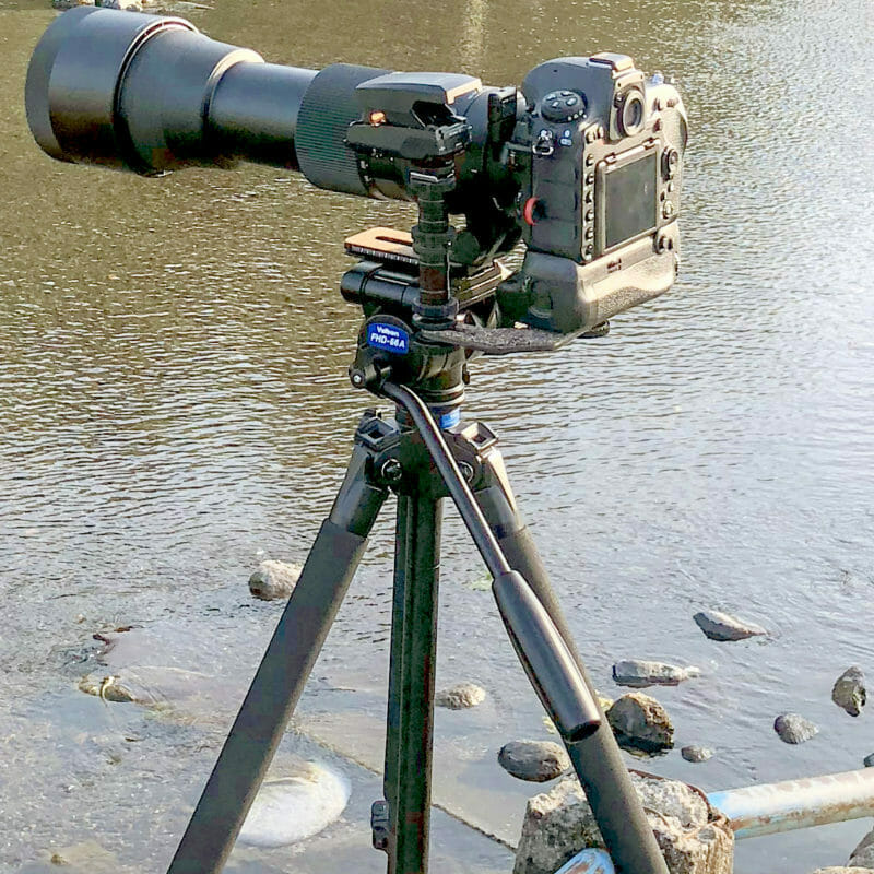 Nikon D500と動きの早すぎるカワセミ撮影に適したAFとは?! カメラ設定