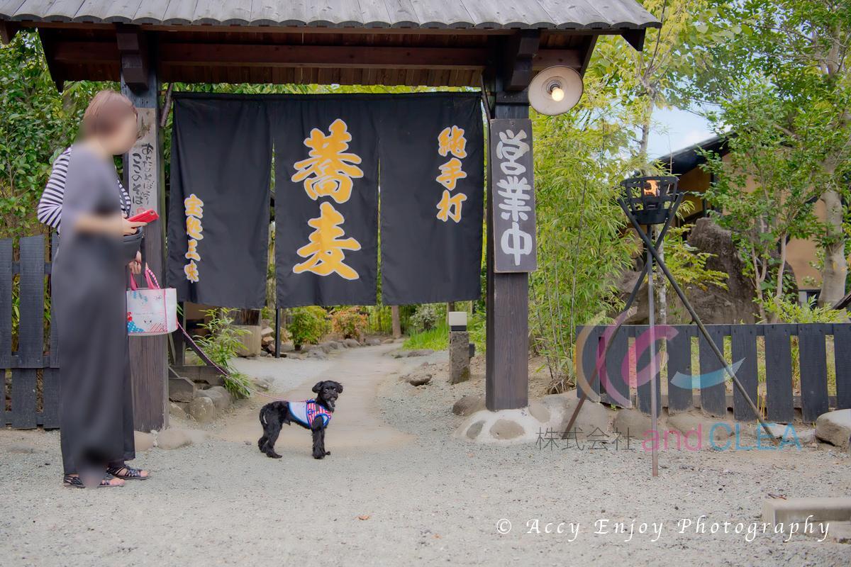 ペット同伴で食事ができる蕎麦屋さん、「創作手打ちそば 宝処三昧」  Photo by ACCY