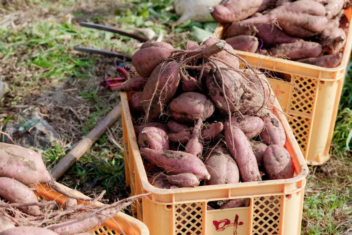 湯島の唐芋 イベント写真の出張撮影