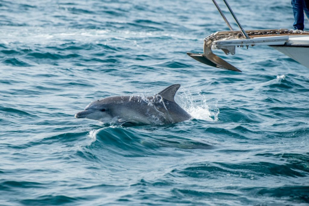 イルカウォッチング 熊本の海で写真撮影